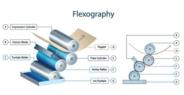 Flexo printing mechanism info-graphic