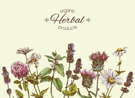 Vector vintage banner with wild flowers and medicinal herbs. Design for cosmetics, store, beauty salon, natural and organic, health care products.Can be used like a greeting card.With place for text